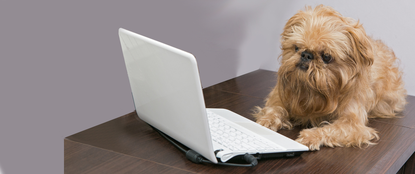 A dog with a laptop