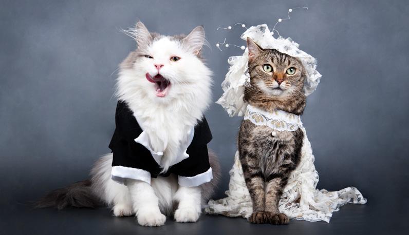 wedding of cats; beautiful dresses