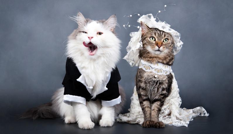 wedding of cats; beautiful dresses