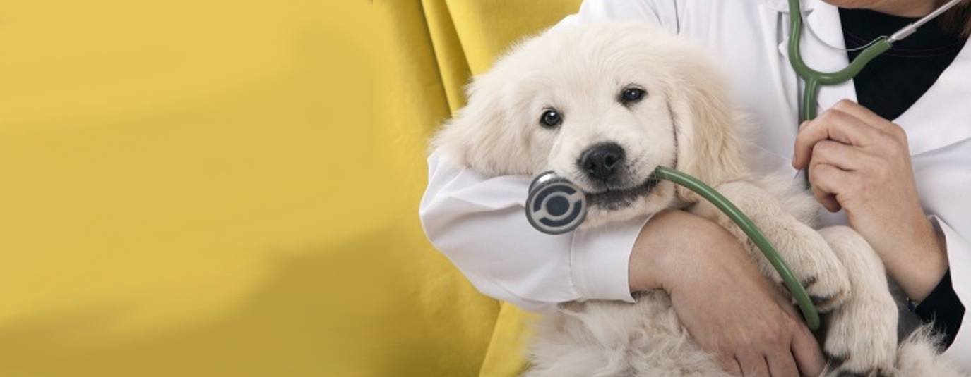 A dog with a doctor after analysis