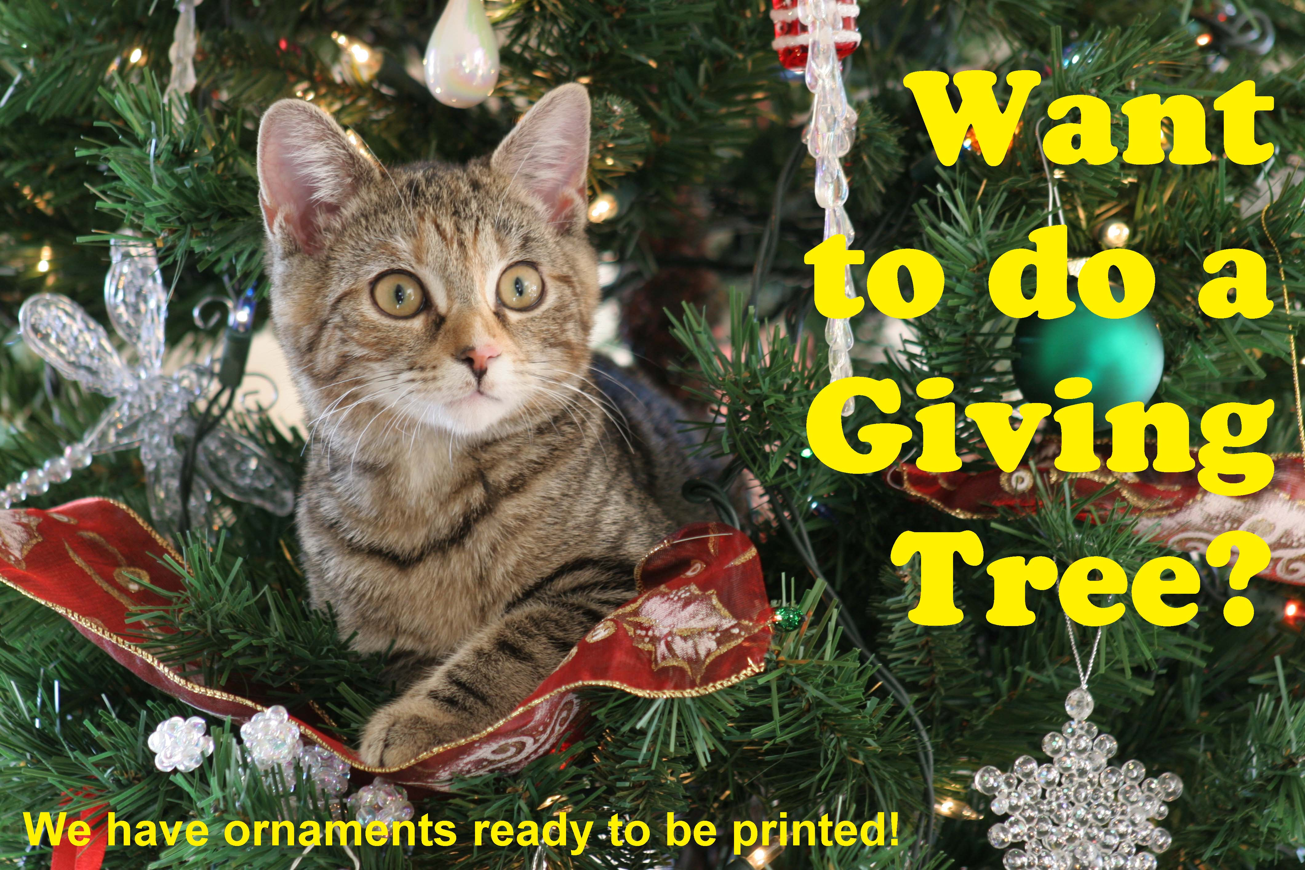 Christmas Giving Tree Ideas.Create A Giving Tree And Help The Animals Joint Animal