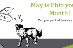 May is microchip your pet month!