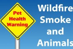 Wildfire Smoke and Animals