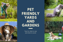 Pet Friendly Yards and Gardens