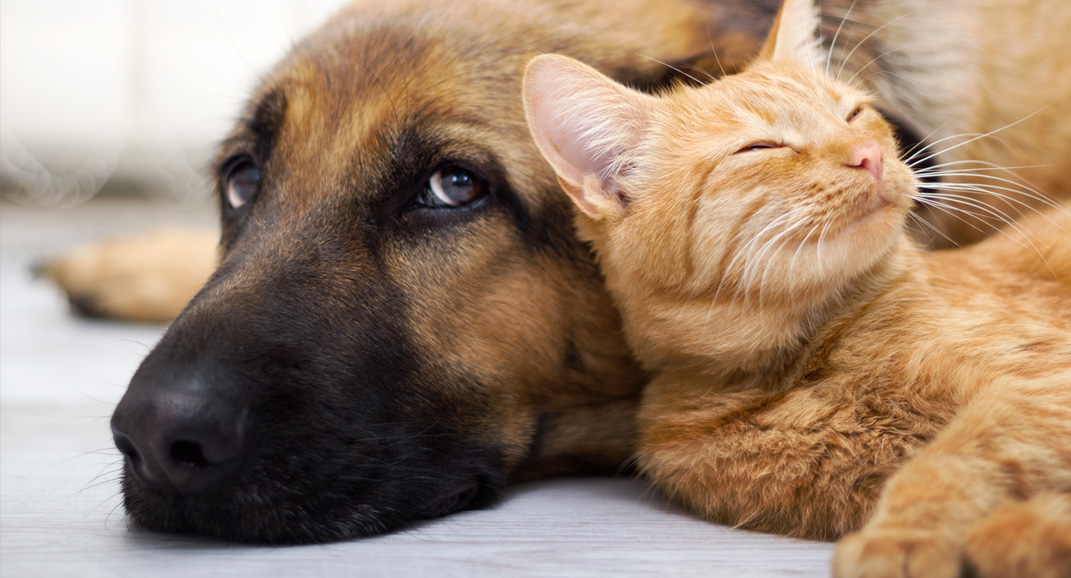 A dog and a cat sleep together