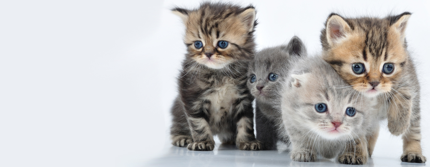 Cute kittens wait for your help
