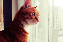Why your cat stares are FIERCE