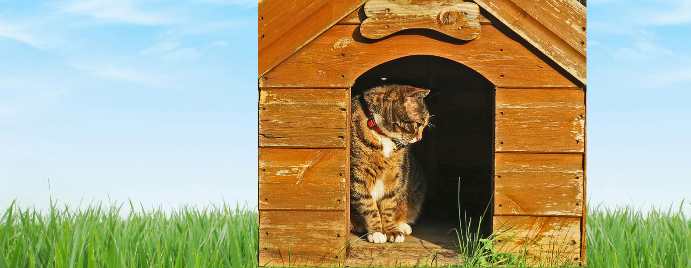 a cat in the dog kennel