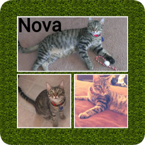 Nova, a loving tom cat, on diferent pictures