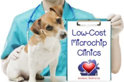 Microchip Clinics