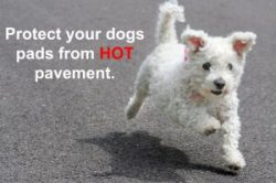 Protecting your dog's pads from hot pavement